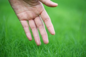 Hand touching green grass Australian Lawn Concepts