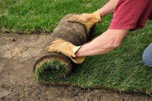 Install New Turf