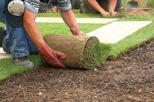 laying turf on soil