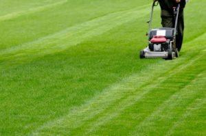 Lawn Mowing Glenview Turf
