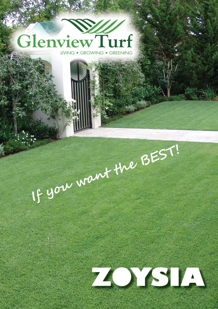 Zoysia Lawns - If you want the best lawn!