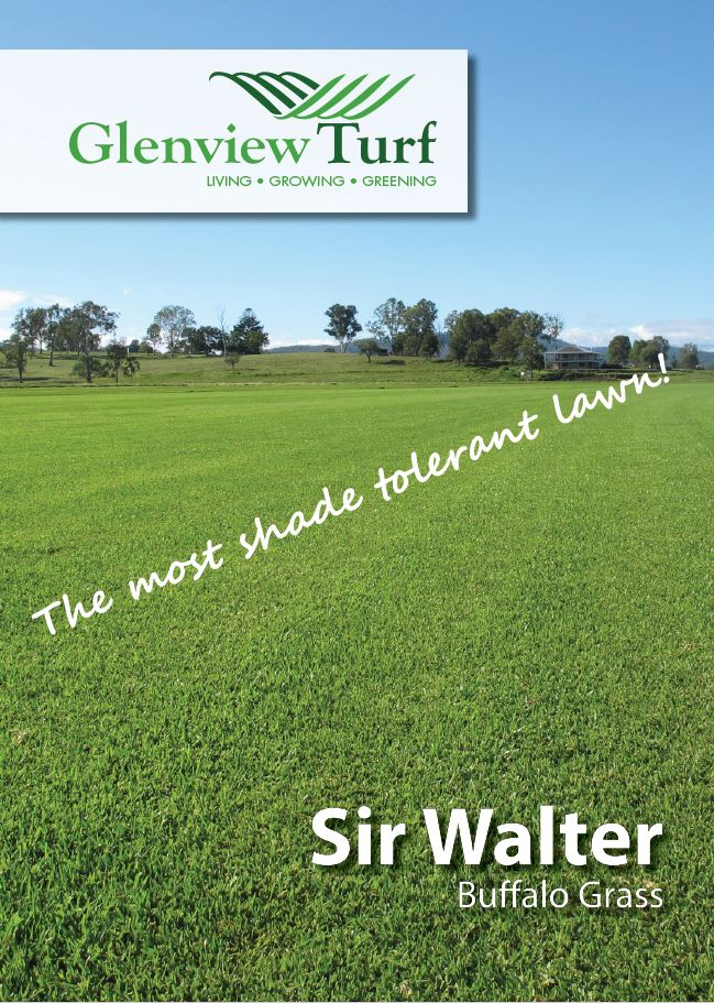 Sir Walter Buffalo Grass 100% Pure brochure1