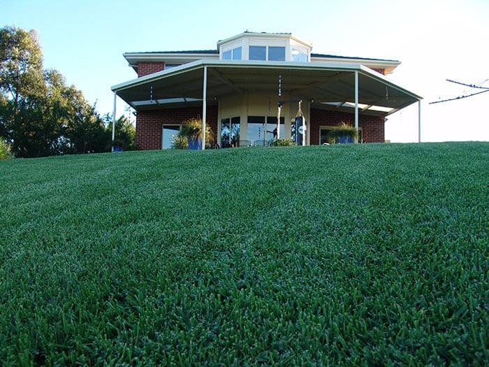Sapphire Soft Leaf Buffalo Grass 27 Glenview Turf 2