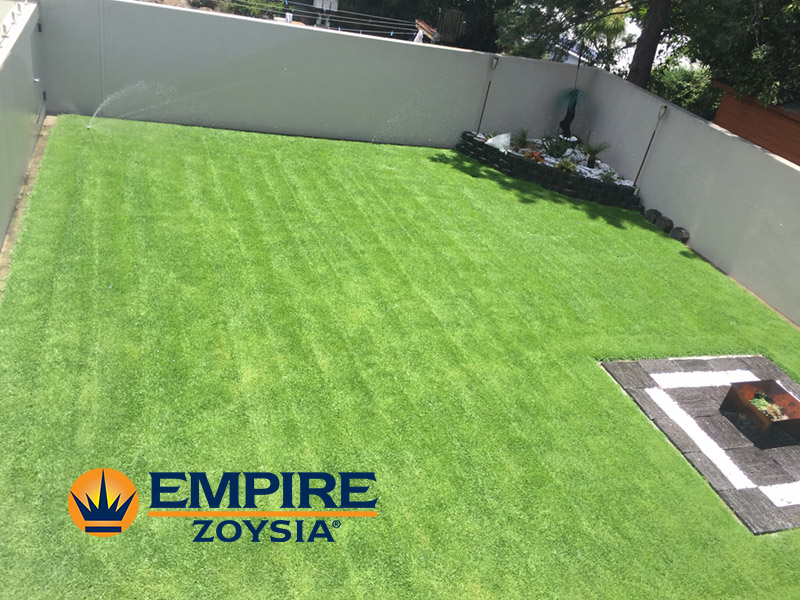 Empire Zoysia Grass Ashgrove Happy Customer Glenview Turf