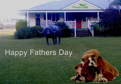 Happy Fathers Day from all the team at Glenview Turf!