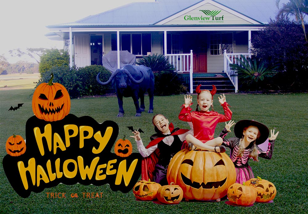 Happy-Halloween-Glenview-Turf-2